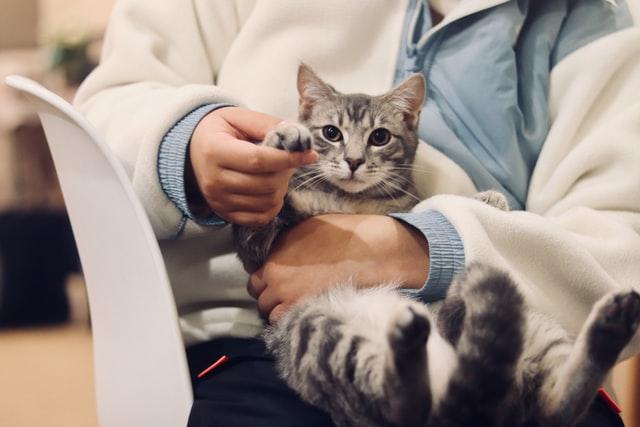 Combien coute un veterinaire